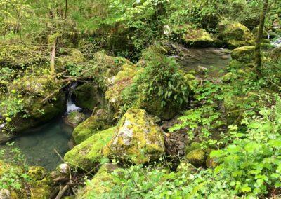 Aguas del Bosque de Taranes